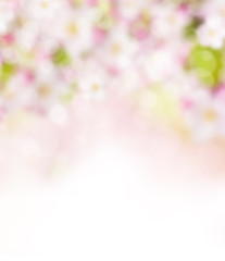 Abstract blurry spring background