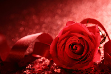 Valentine rose