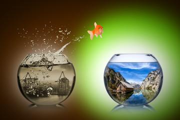 Fototapete - fish rethink concept