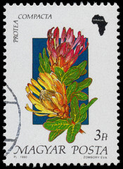 Stamp printed in Hungary, shows Flower Protea compacta