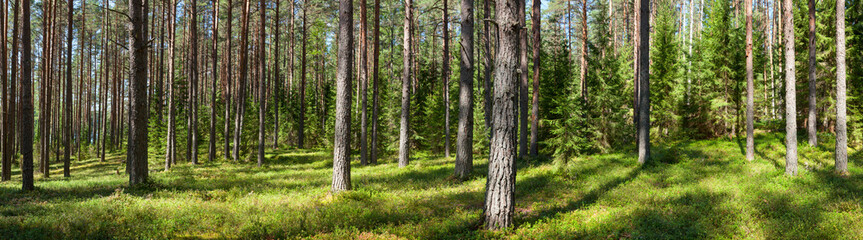 Aluminium Prints Forest Summer forest panorama