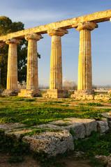 Metaponto Santuario Templio di Hera