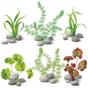 Different kinds of algae set