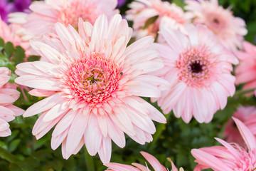 gerbera on beautifully arranged bouquet