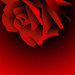 rose,rosen,blüte,blume,blumen,floral,rot,happy valentines day