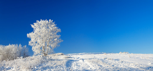 winter landscape a panorama with the blue sky, a field and the o