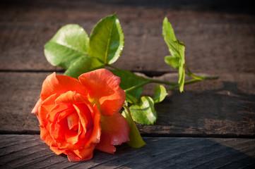 Rose flower on wooden tableRose flower on wooden table