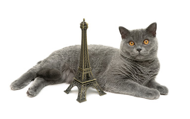 cat with yellow eyes lying about the figures of the Eiffel Tower