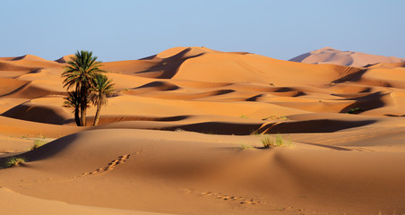Spoed Fotobehang Marokko Morocco. Sand dunes of Sahara desert