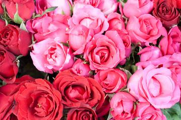 Roses background.