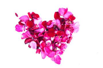 petal rose flower for love