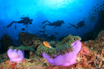 Wall Mural - Scuba diving on coral reef