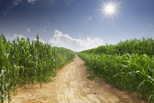 Wall mural skyline and corn field