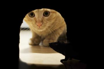 il gatto e il topo