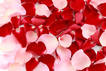 Beautiful red and pink rose petals background