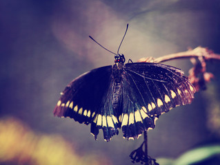 photo of beautiful butterfly on wild flower toned with a retro filter