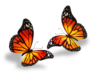 Yellow-orange butterflies, isolated on white background