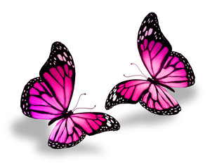 Two pink butterflies, isolated on white background