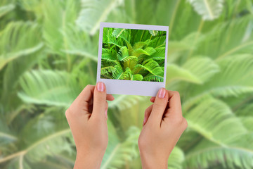 Photo card in hands on palm leaves background