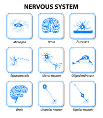 Nervous system. Set icons