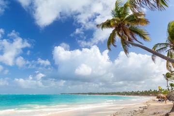 Palm tree on sandy beach. Coast of Atlantic ocean