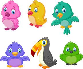 Cartoon birds collection set