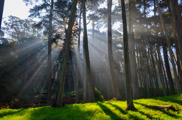 Forest with sun rays and lush grasses