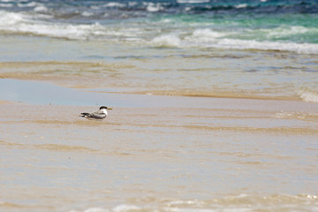 Seagull staying in the water on shore