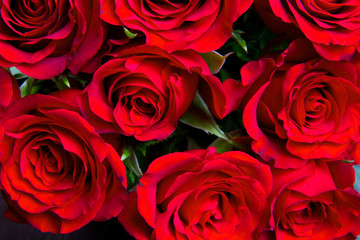 Red natural roses background