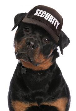 Rottweiler security