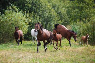 Fototapeta Herd of horses