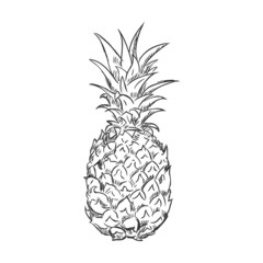 Vector Single Sketch Pineapple