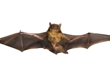 Close up of the bat Isolated on white background