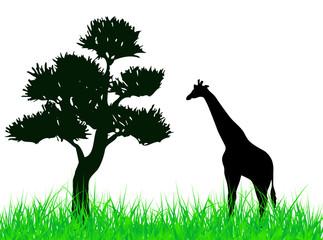 Giraffe on the grass illustration
