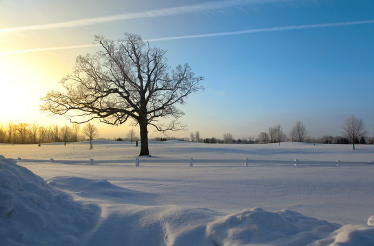 Single tall tree against sun rise in winter time