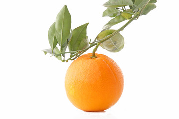Orange sur sa branche