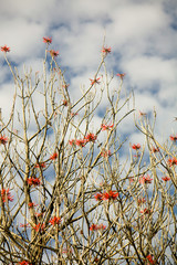 Museo Dolores Olmedo tree branches with red flowers and sky with