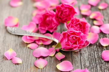 Pink rose in spoon and petals on a wooden background