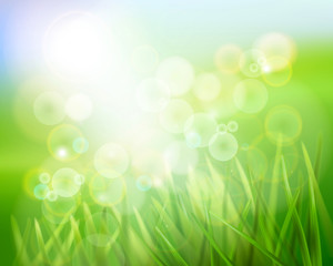 Grass in sunlight. Vector illustration.