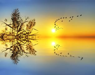 reflejos del amanecer en el lago calmado