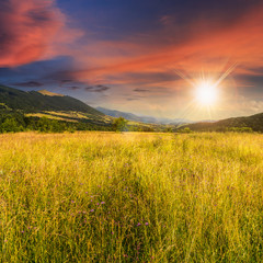 meadow with high grass in mountains at sunset