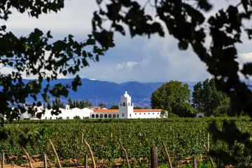 Vineyards, Argentina
