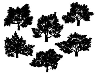 Silhouettes of oak trees with leaves.