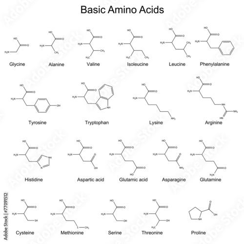 Skeletal structures of basic amino acids\