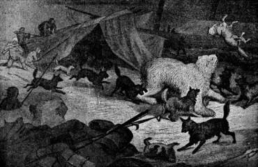 Victorian engraving of a polar bear raiding a camp