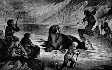 Fototapeten Pole Victorian engraving of a walrus hunt