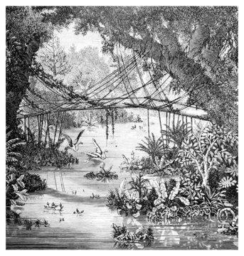 Victorian engraving of a  jungle scene, Darjeeling, India
