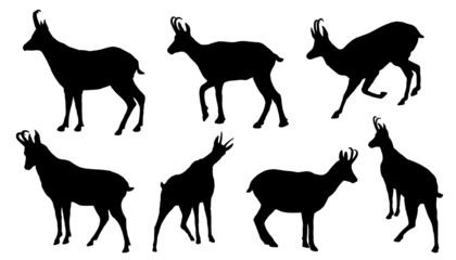 chamois silhouettes