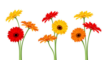 Gerbera flowers. Vector illustration.