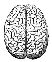 Victorian engraving of the human brain